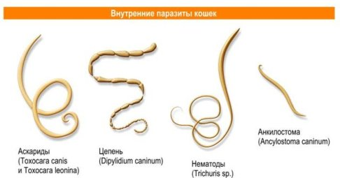 определить есть ли человека паразиты