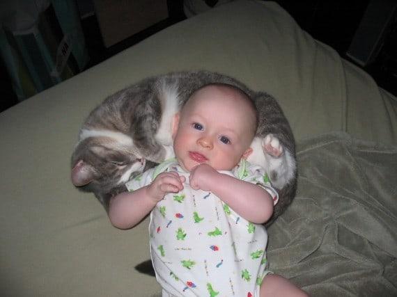 Кошки спасают детей