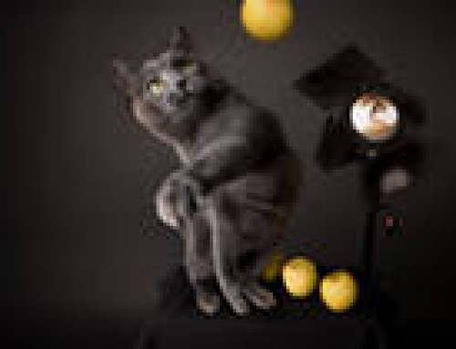Кино и кошки