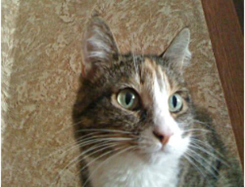 Левински— кошка с характером!
