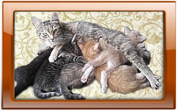 котята от разных котов