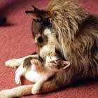 джинни и кошка