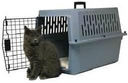 переноска для кошек