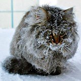 кошка зимой