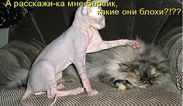 кошки и блохи
