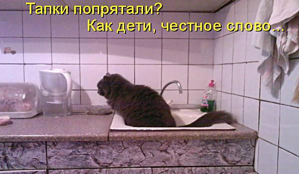 кот ходит в раковину