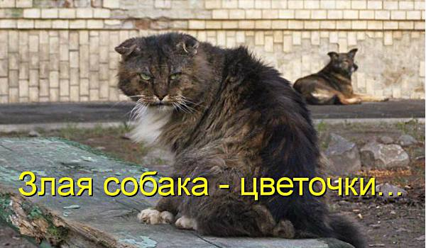 злой кот