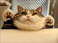 кот-толстяк