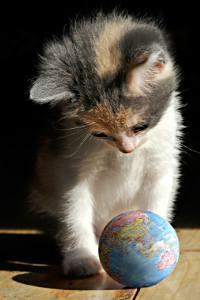 котенок с глобусом