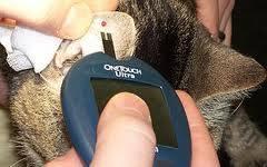 измерение сахара кошке