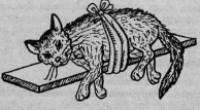 кошка после падения