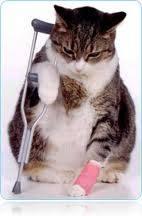 травма у кошки