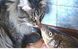 кот и рыба