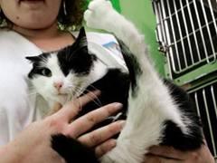 пятилапая кошка