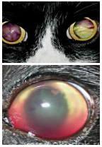 болезни глаз кошки