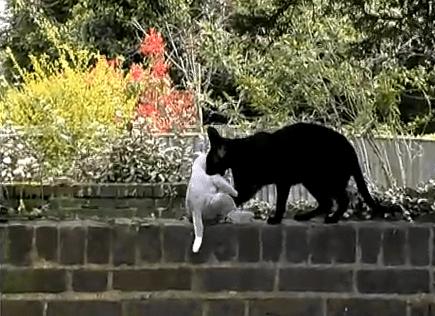 Кошки-воры