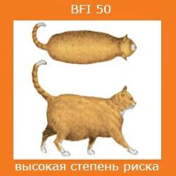 степень ожирения кошки -4