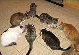 у кошек обед