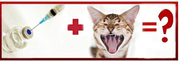 вакцинация и смена зубов у кошки