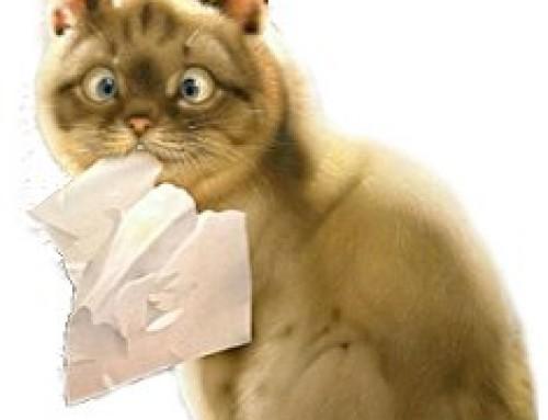 диарея у кота чем лечить в домашних условиях