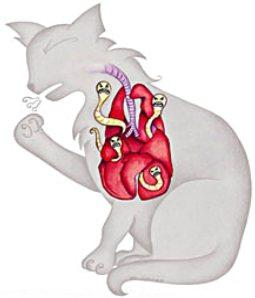 легочные глисты у кошки