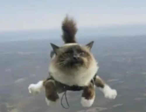 Кот, который упал с неба