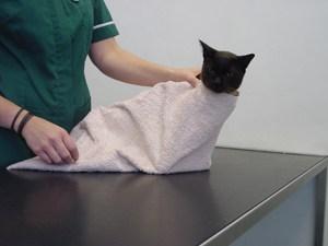 Как дать кошке таблетку