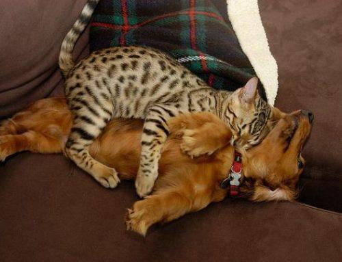 Кошки Спять На Собаках 21 фото