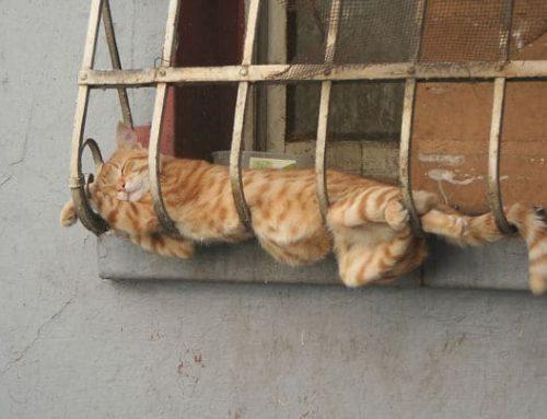 15 Кошек Спящих В Невероятных и Нелепых Позах