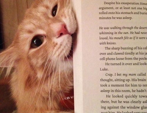 15 Кошек Мешающих Читать 😼