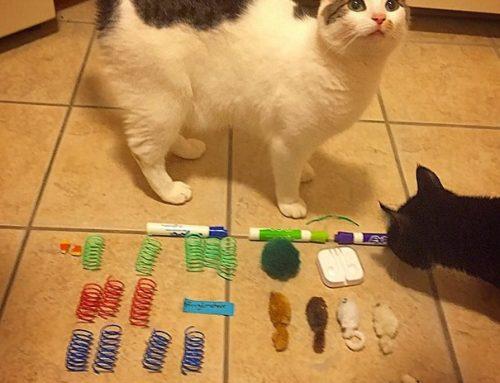 Кошки-Клептоманы 🙀