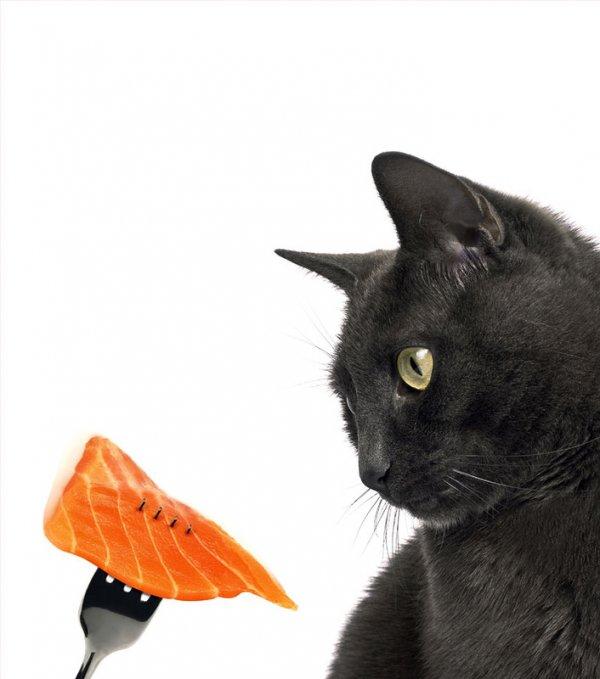 Чем кормить кошку - кормами или натуральной едой?