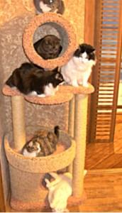 мои кошки