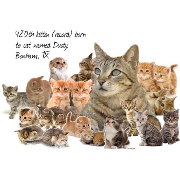 Кошки книги Гиннеса