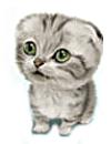 выбор котенка