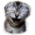 котенок смеется