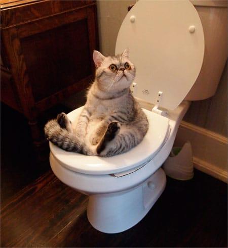 Диета коту при запоре