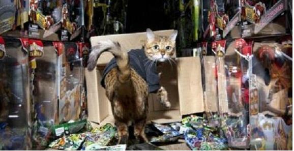 кот Майли