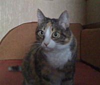 кошка Левински
