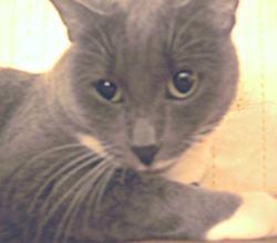 кошка жанна аркадьевна