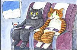 кошки в самолете