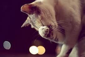 кот трет нос
