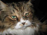 опухоль носа у кота
