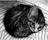 котенку холодно