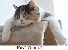 кошка при течке начинает писать