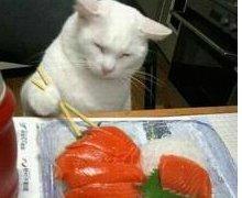 кошка ест суши