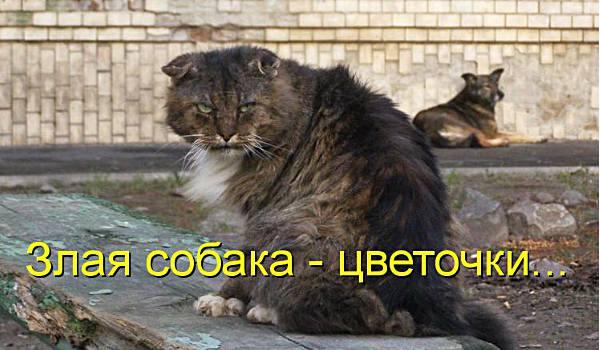 Злая кошка и кот
