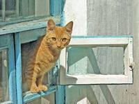 Как кот упадет и умрет
