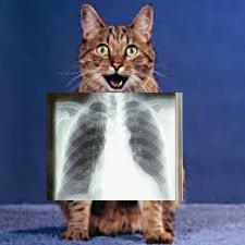 рентген кота