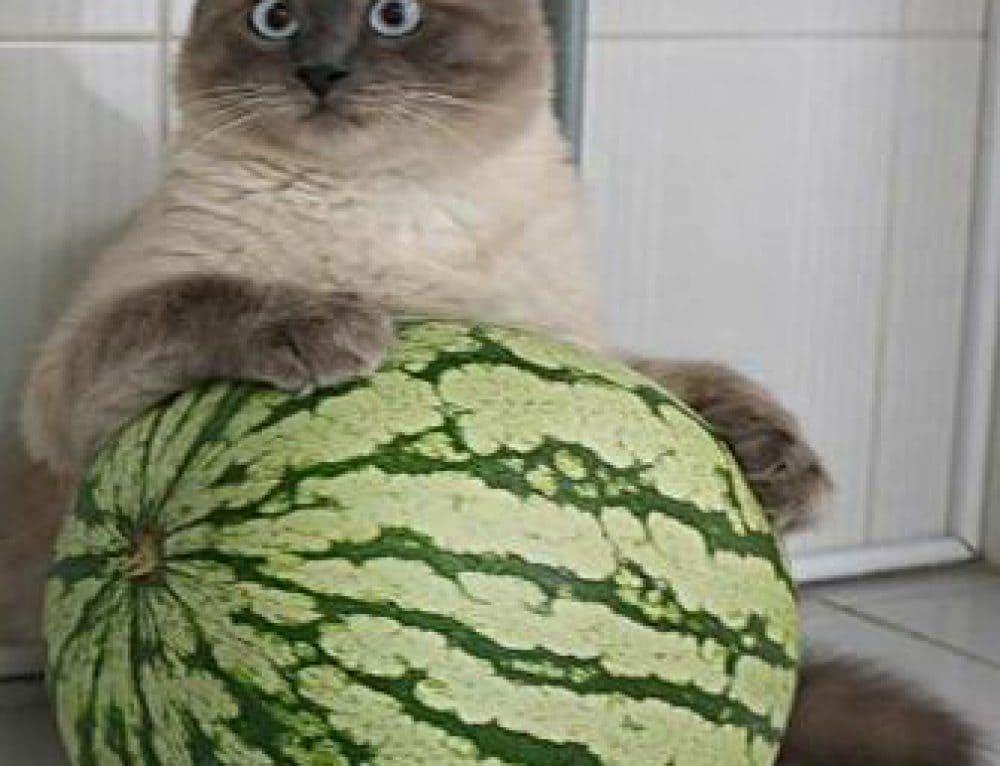 Хочу арбуз!